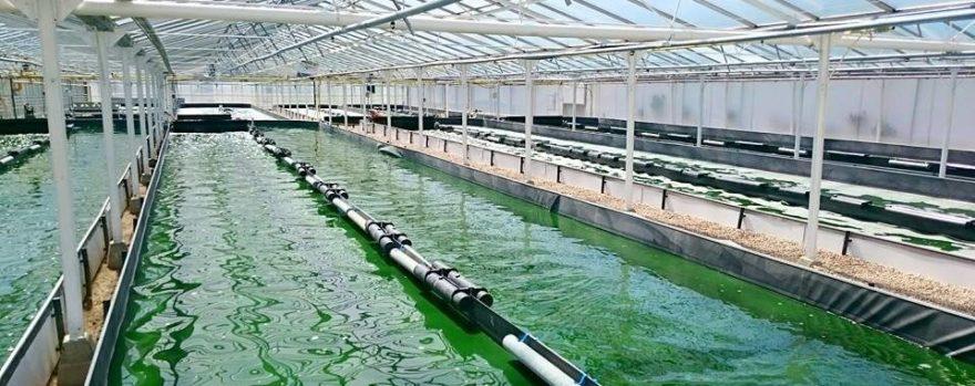 bassin algues