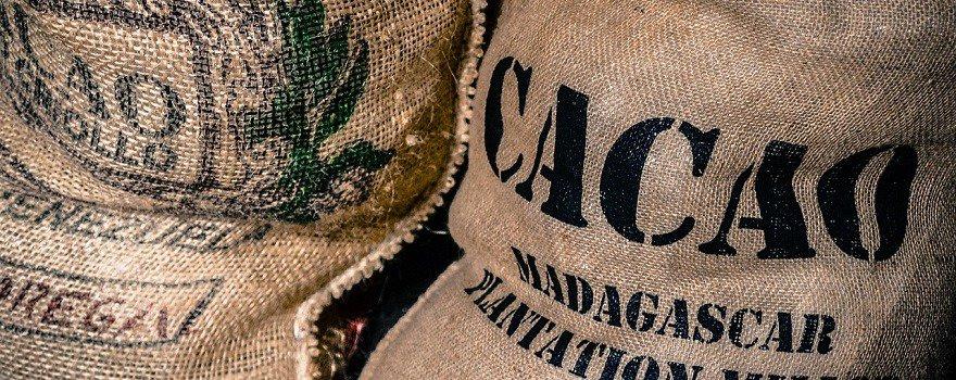 cacao criollo