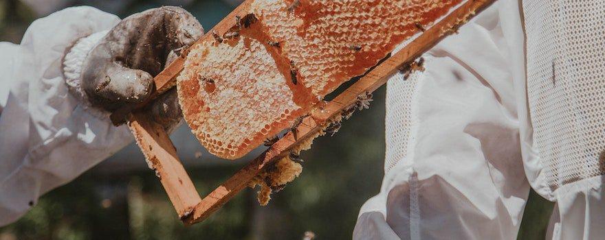 bienfaits produit de la ruche