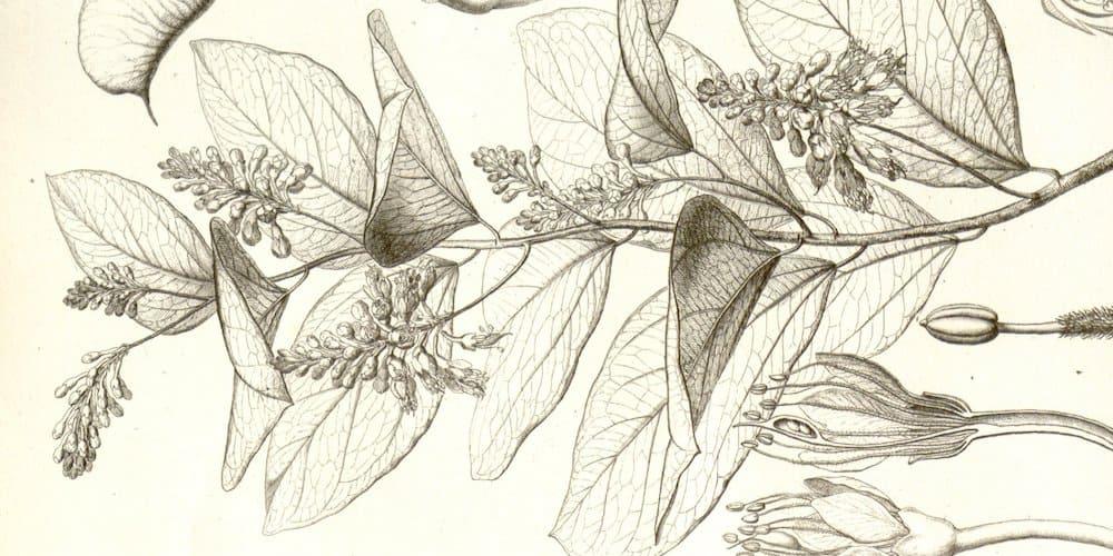 Acheter Griffonia Simplicifolia - dépression: traitement par prise de médicaments - AboutKidsHealth