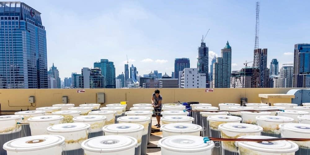 rooftop spirulina bangkok