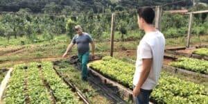 Jérémie et Antoine veulent remplacer le café par leur maté des forêts du Paraná