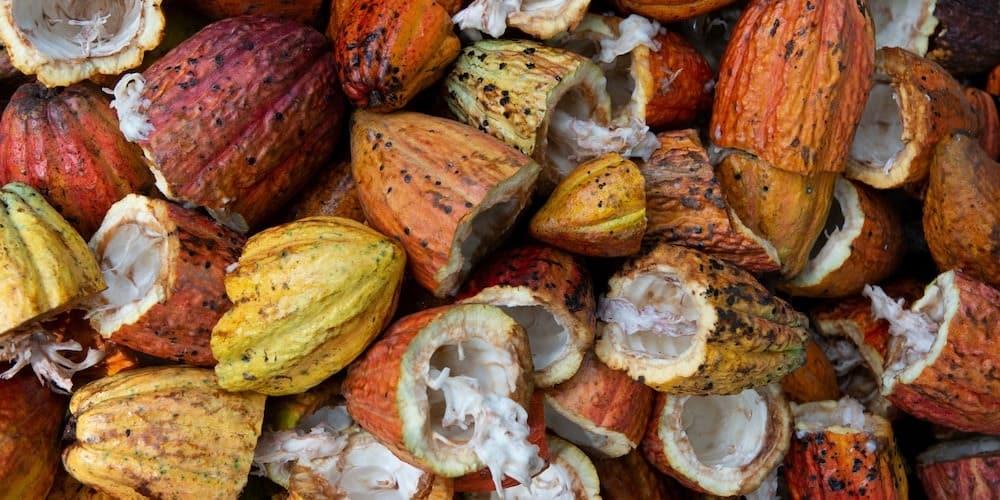 Nestlé abandonne progressivement ses exploitations illégales de cacao en Afrique
