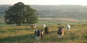 Danone : l'entreprise «à mission» mise sur les produits laitiers d'origine végétale