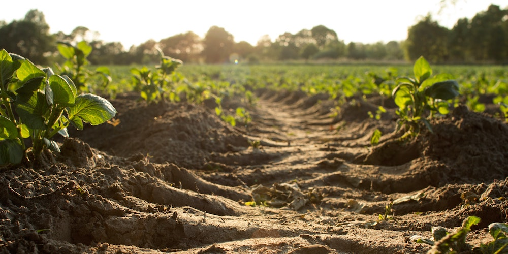 « La Bio » : allons plus loin que les labels et l'agriculture !
