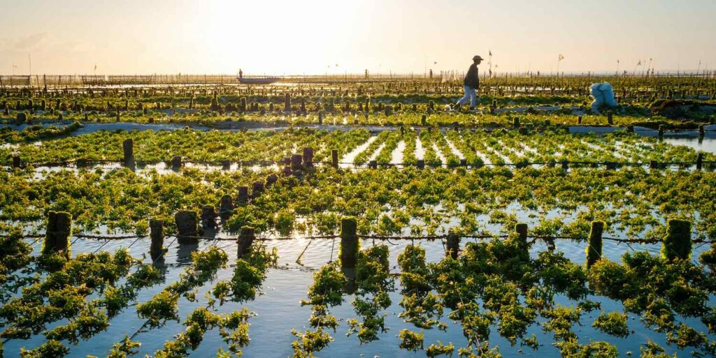 Manger des algues, un acte santé original et… engagé !