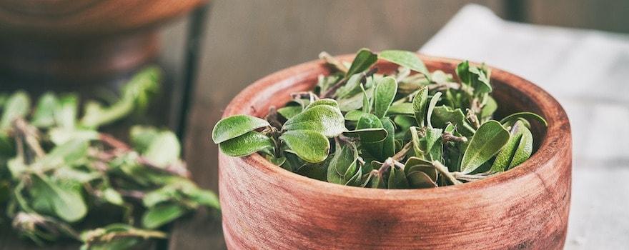 comment soigner une cystite